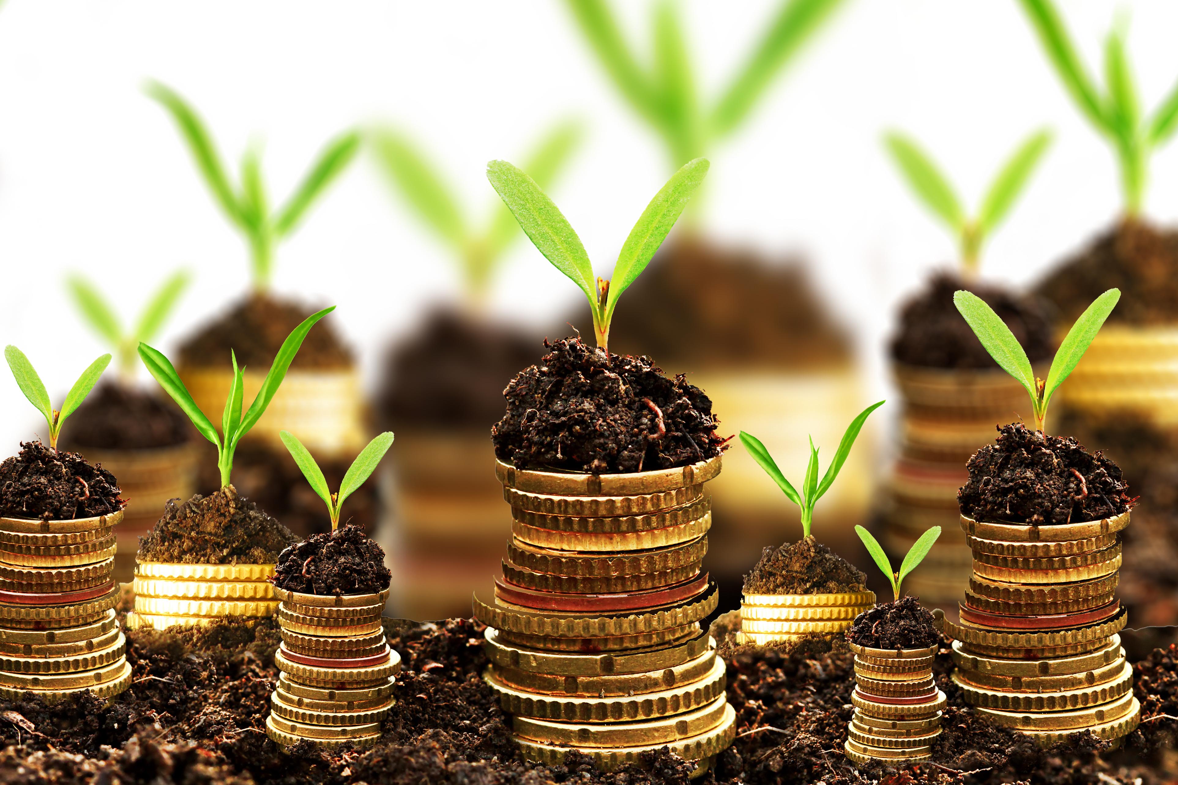 инвесторы дающие деньги в долг онлайн заявка на кредит под залог автомобиля в почта банке